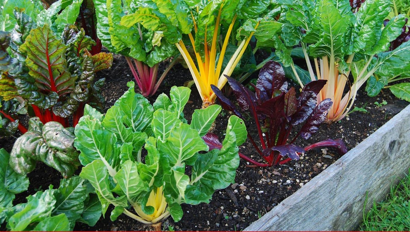 Wanderlust For Soil's Sake: The Case for Organic Gardening
