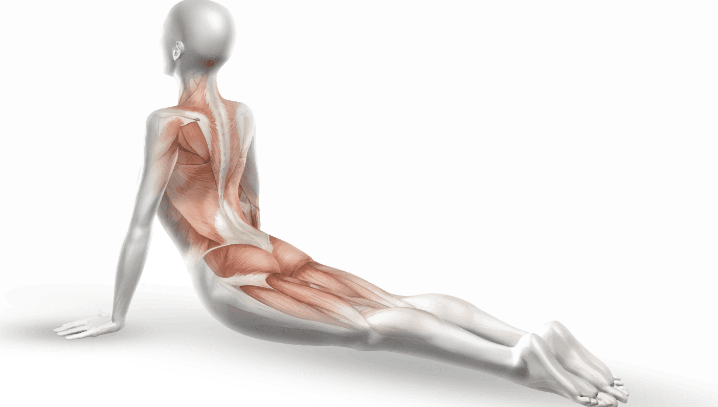 The Science of Stretching: Fascia, Fascia Everywhere