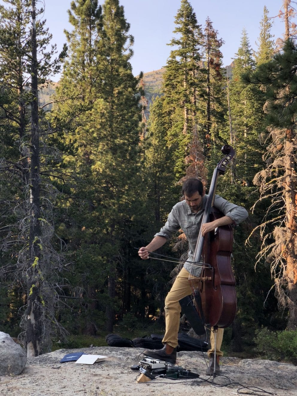 man playing upright bass in woods surrounded by trees