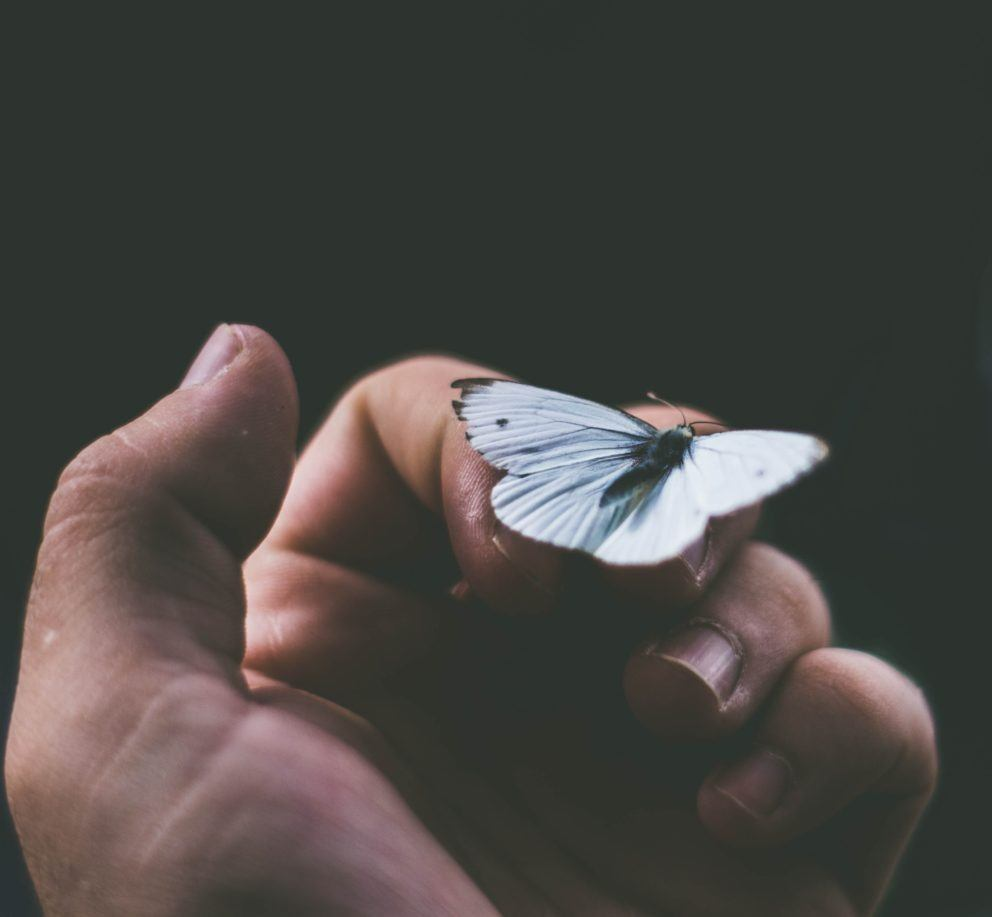 hand holding white butterfly