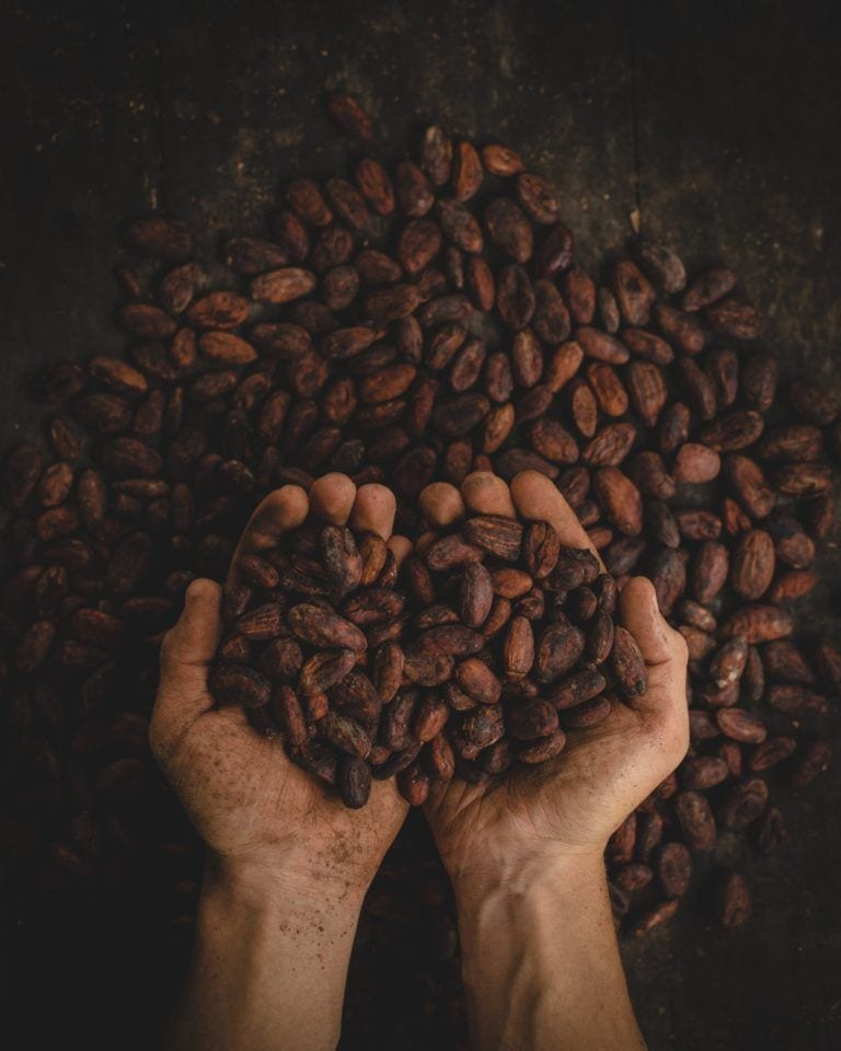 hands holding out dried cacao seeds