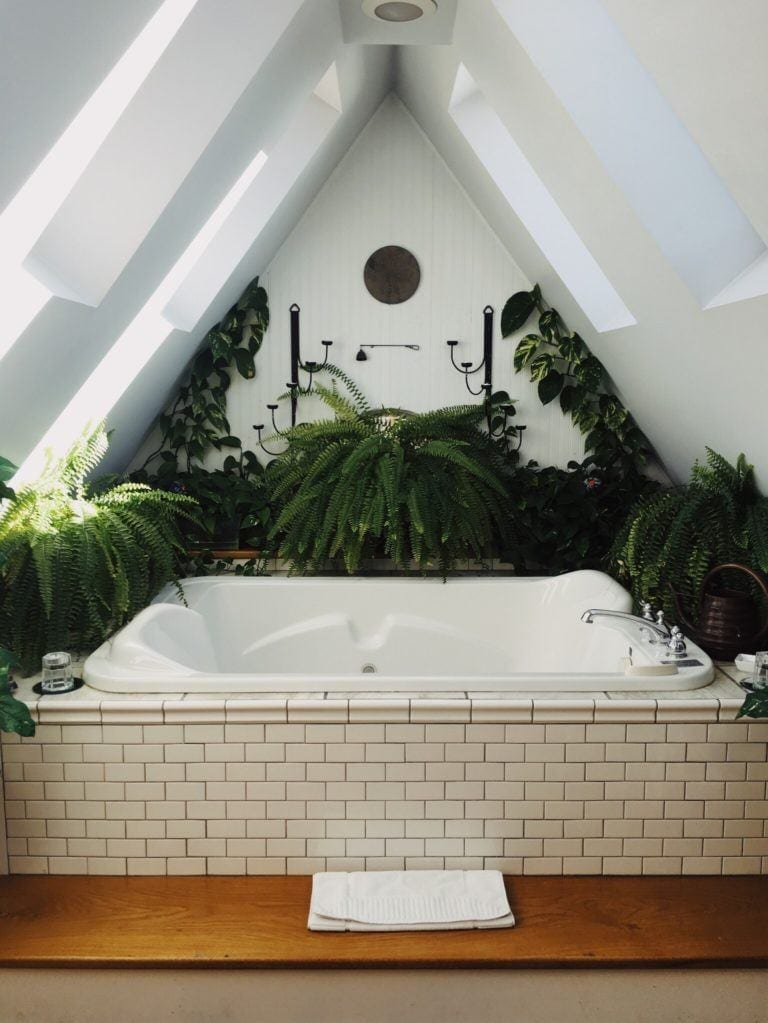 bath surrounded by pine and ferns